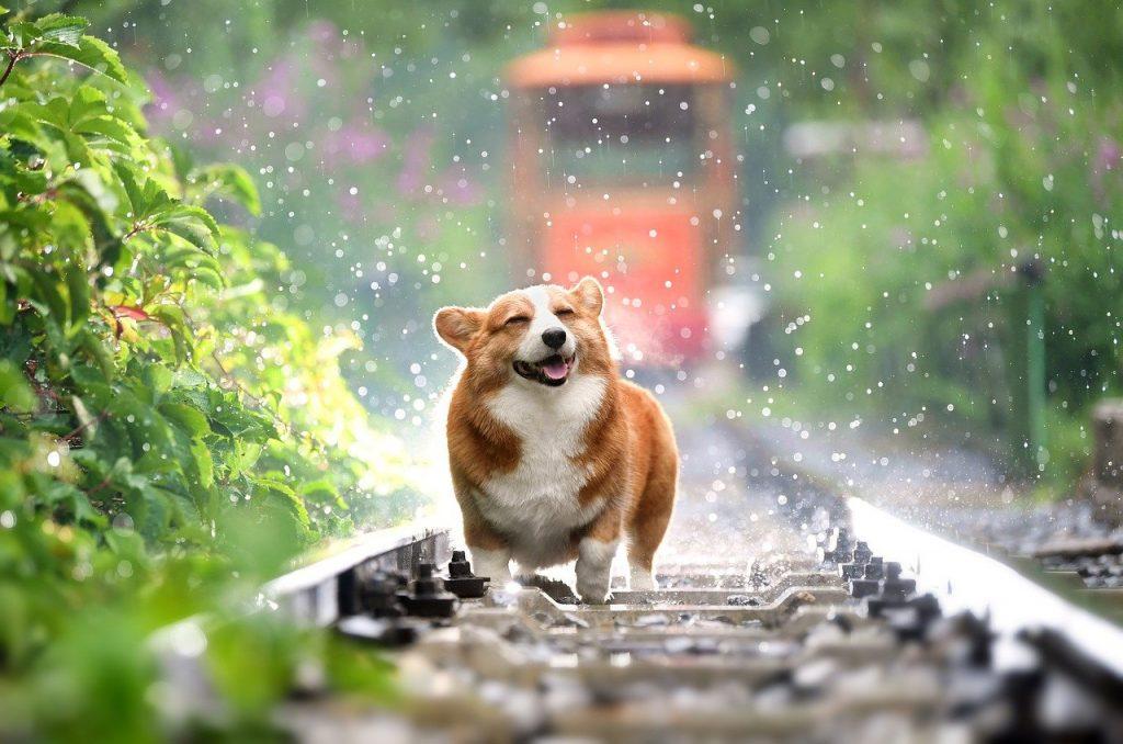 como pasear a los perros